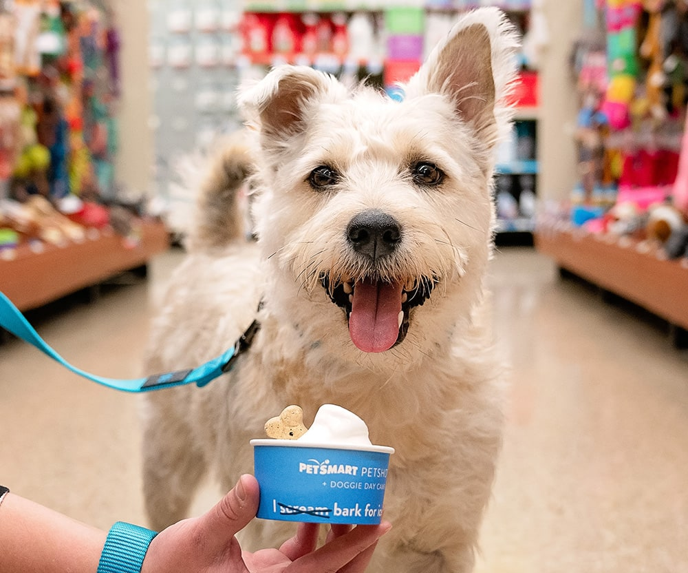 PetSmart Is Offering Free Dog-friendly Ice Cream at Select