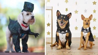 Photo of Feeling Low? These Adorable Pet Costumes Are Instant Pick-Me-Ups